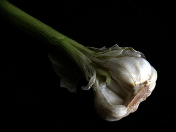 Garlic with stem