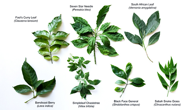 Medicinal plants that fight cancer