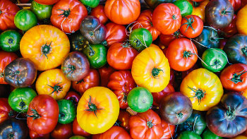 many varieties of tomatoes