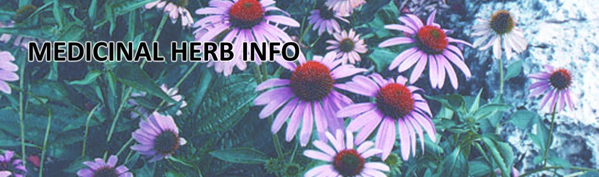 Medicinal Herb Info